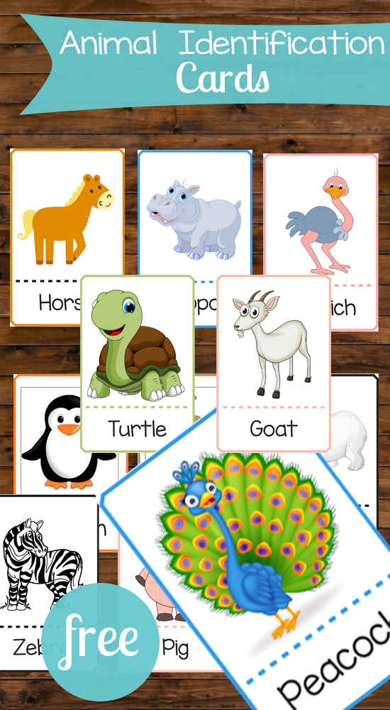 These animal matching cards are perfect for toddlers! There are so many ways these could be used for games and education!