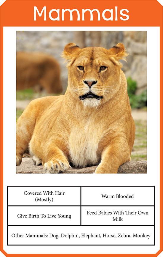 mammals classification card