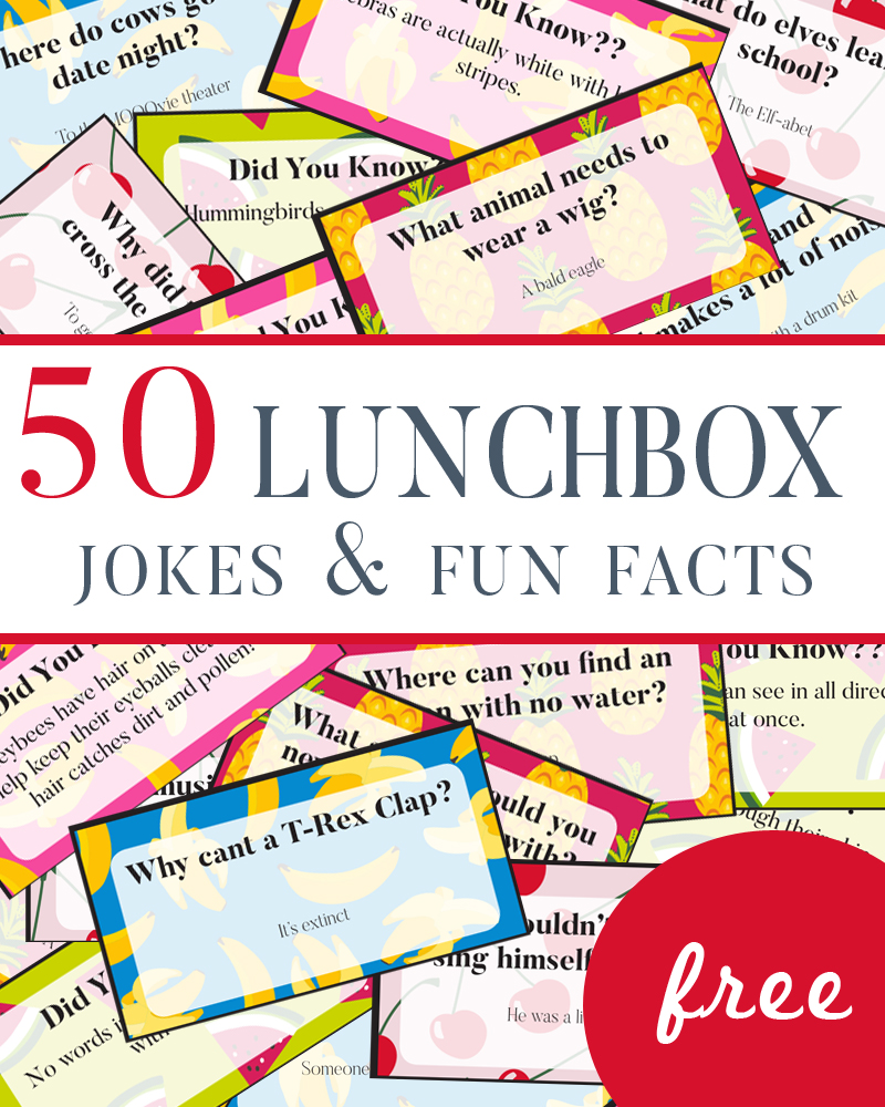 50 Lunchbox Jokes and Fun Facts for young kids